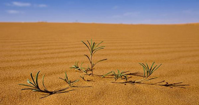 Types of plants in the desert of Saudi Arabia | The